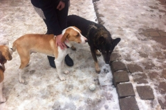 Azyl týraných psů