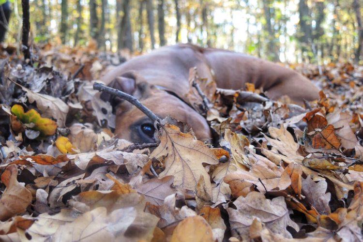 Podzimní soutěž o přívěšek s vlastní fotkou